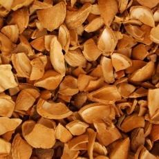 Apricot Kernel Shell